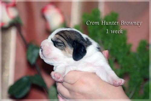 http://cromhunter.ru/images/stories/thumbnails/images-stories-remote-http--uploads.ru-i-j-l-f-jlfrL-500x334.jpg